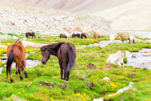 Group Of Horses In Grassland With Stream And Mountain Background.