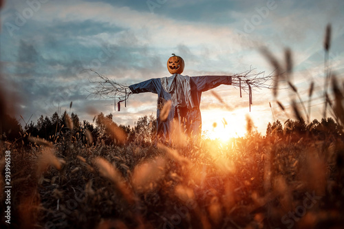 Papiers peints Culture Scary scarecrow with a halloween pumpkin head in a field at sunset. Halloween background, copy space.