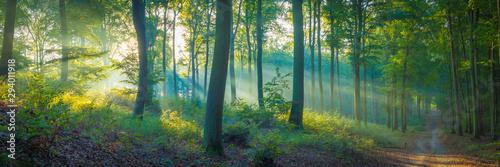 Aluminium Prints Road in forest Sonnenstrahlen im Wald am Morgen im Herbst - Buchenwald Panorama