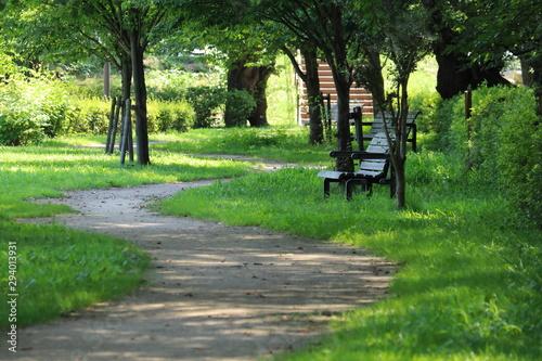 Fototapeta 公園