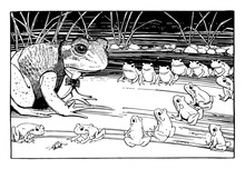 Frogs Sitting In Rows Looking ...