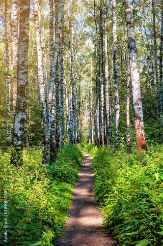 path in birch forest Canvas Print