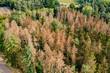 Luftaufnahme vom Waldsterben im deutschen Nadelwald