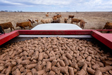 Supplemental Feed For Cattle I...