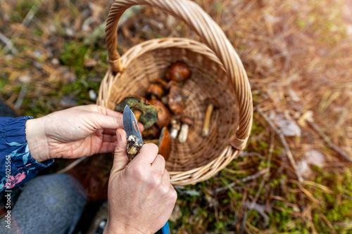 Fotografía Woman picking mushroom in the forest