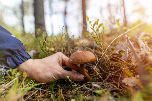 Obraz na płótnie Woman picking mushroom in the forest