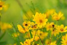 Yellow Daisy Sunflower Flowers...
