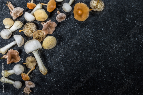 A group of different edible and poisonous mushrooms Wallpaper Mural