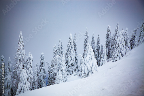 Poster Blanc magical winter landscape with snowy firs in the mountains