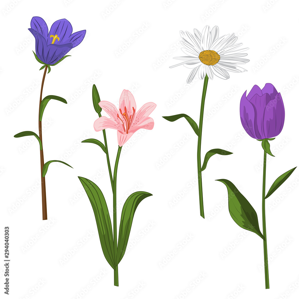 Fototapeta Spring and summer forest and garden flowers isolated on white vector. Illustration of the nature of the flower, Lily, chamomile, tulip, campanula, isolated on white background