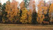Aerial view: Flying over a country road in the autumn forest with orange birches. Nature, travel, recreation.Top view of the forest .