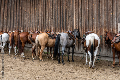 Group of horses saddled and bridled up ready for a trail ride, lined up along barn outside wall