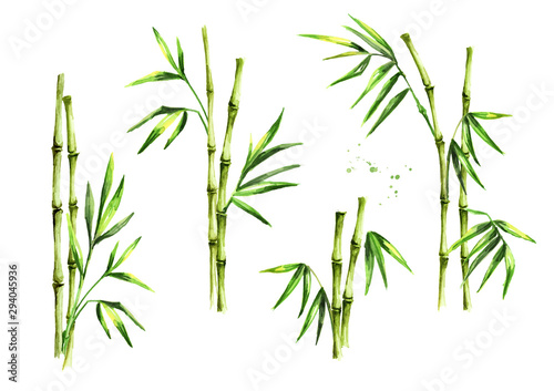 Green bamboo stems and leaves set. Watercolor hand drawn illustration, isolated on white background