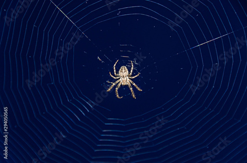 Small spider eating a green bug, white spiderweb net, close up eyes Canvas Print