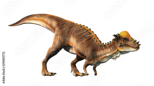 A brown Pachycephalosaurus on a white background. Pachycephalosaurus  known for it s thick skull  was an dinosaur of the Cretaceous in North America. 3D Rendering