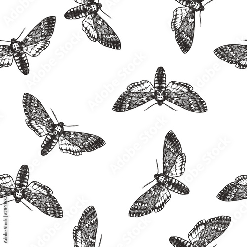 Stickers pour portes Papillons dans Grunge Vector seamless pattern with death head moth in engraving style. Hand drawn texture with butterfly isolated on white. Background with symbol of Halloween