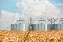 Silos In A Corn Field On A Bea...