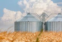 Silos In A Corn Field On A Beautiful Day