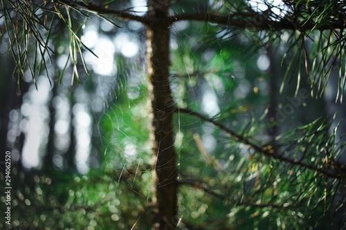 Foto auf AluDibond Dunkelgrau tree in forest