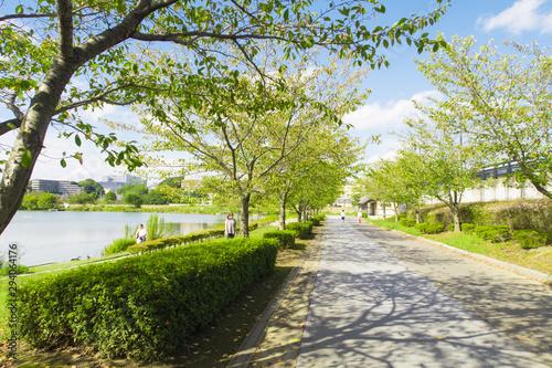 Obraz na plátně 仙波公園 茨城県