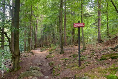 Fototapeta Mountain trail in a forest in Giant Mountains obraz
