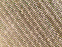 Aerial View Cultivated Field From The Drone