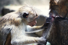 Close-up Of Two Monkeys Near D...