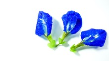 Butterfly Pea Flower Or Clitor...
