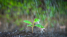 New Life Of Young Plant Seedli...