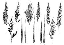 Ink Prints Of Natural Reed