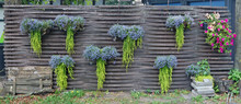 On A Wooden Rustic Village Fence Hang Pots With Bright Autumn Flowers And Plants