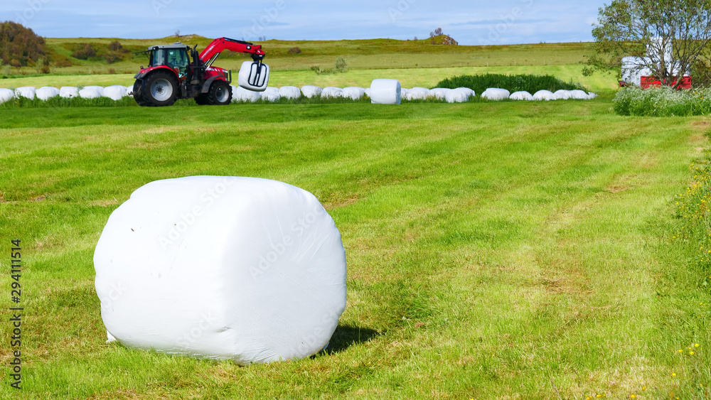 Fototapeta Bale of hay wrapped in plastic foil, Norway