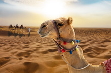 Camel Ride In The Desert At Su...