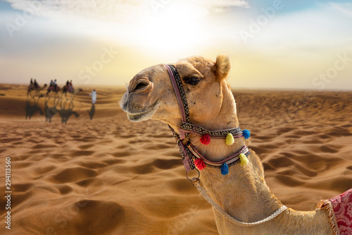 Camel ride in the desert at sunset with a smiling camel head Fotobehang