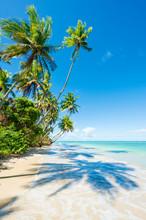 Palm Trees Casting Shadows On A Tropical Brazilian Beach On A Remote Island In Bahia Nordeste Brazil