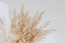 Beige Reeds Agains White Wall. Beautiful Background With Neutral Colors. Minimal, Stylish, Trend Concept. Parisian Vibes.