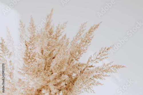 Obraz na plátně Beige reeds agains white wall