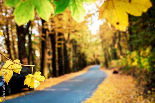 Foto auf AluDibond Melone Magic beautiful autumn landscape with tree trunks and yellow leaves along road in cosy forest on background