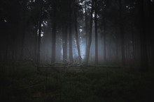 Dark Misty Forrest Scene With ...