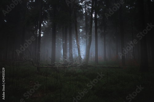 Fototapeta Dark misty forrest scene with dead trees shot on a foggy autumn morning. Trees with woodpecker den. Very moody, spooky and dark edit. obraz