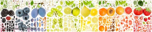 Multicolor Fruit Collection Abstract - 294137163