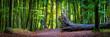 Leinwandbild Motiv Buchen Wald Panorama - Jasmund Nationalpark auf Insel Rügen