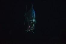 Lockdown Fish Selene Dorsalis ...