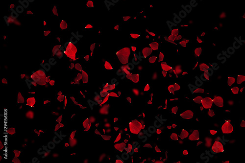 Canvas Print red colorful petals rose flying animation on black background, love and valentin