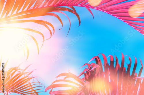 Fotografie, Obraz Copy space pink tropical palm tree on sky abstract background