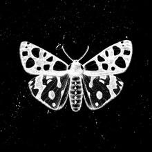 Hand Drawn Leopard Tiger Moth ...