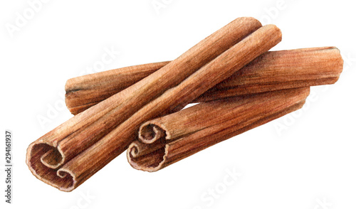 Valokuvatapetti Dried cinnamon sticks  bunch watercolor illustration