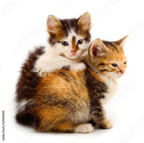 Two small kittens isolated. Canvas Print