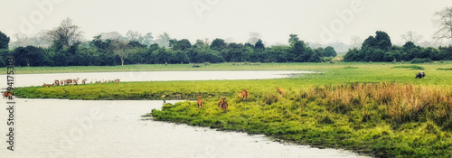 Photo kaziranga National Park Panorama