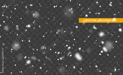 Obraz Falling white snow on transparent background. Texture winter snowflakes. - fototapety do salonu